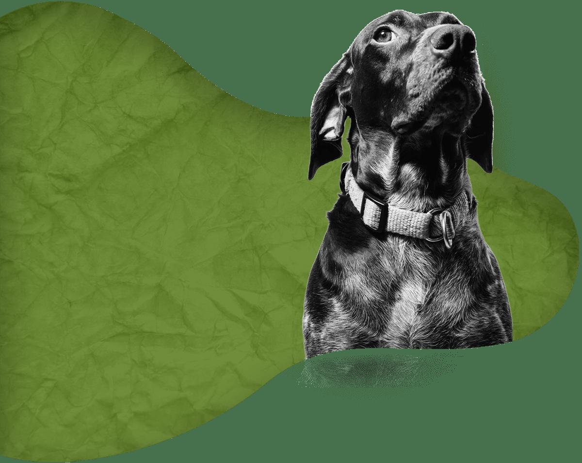 Éducation canine en Corse