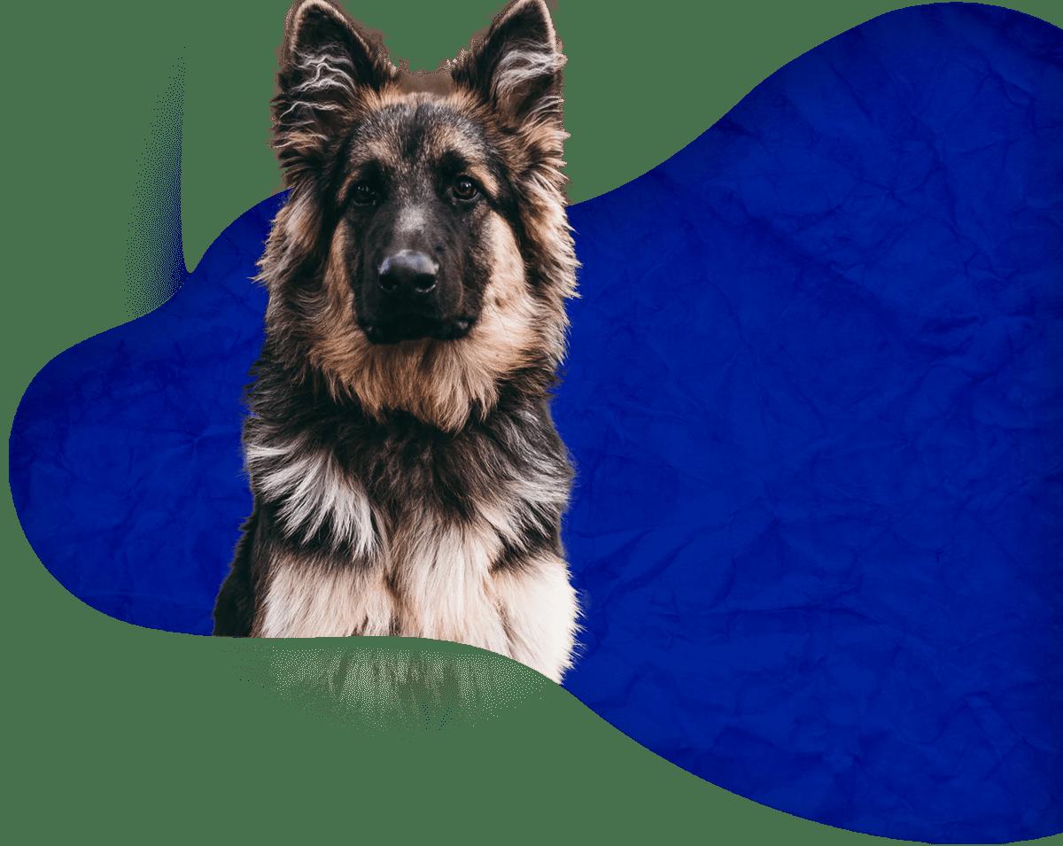 Éducateur canin à Borgo