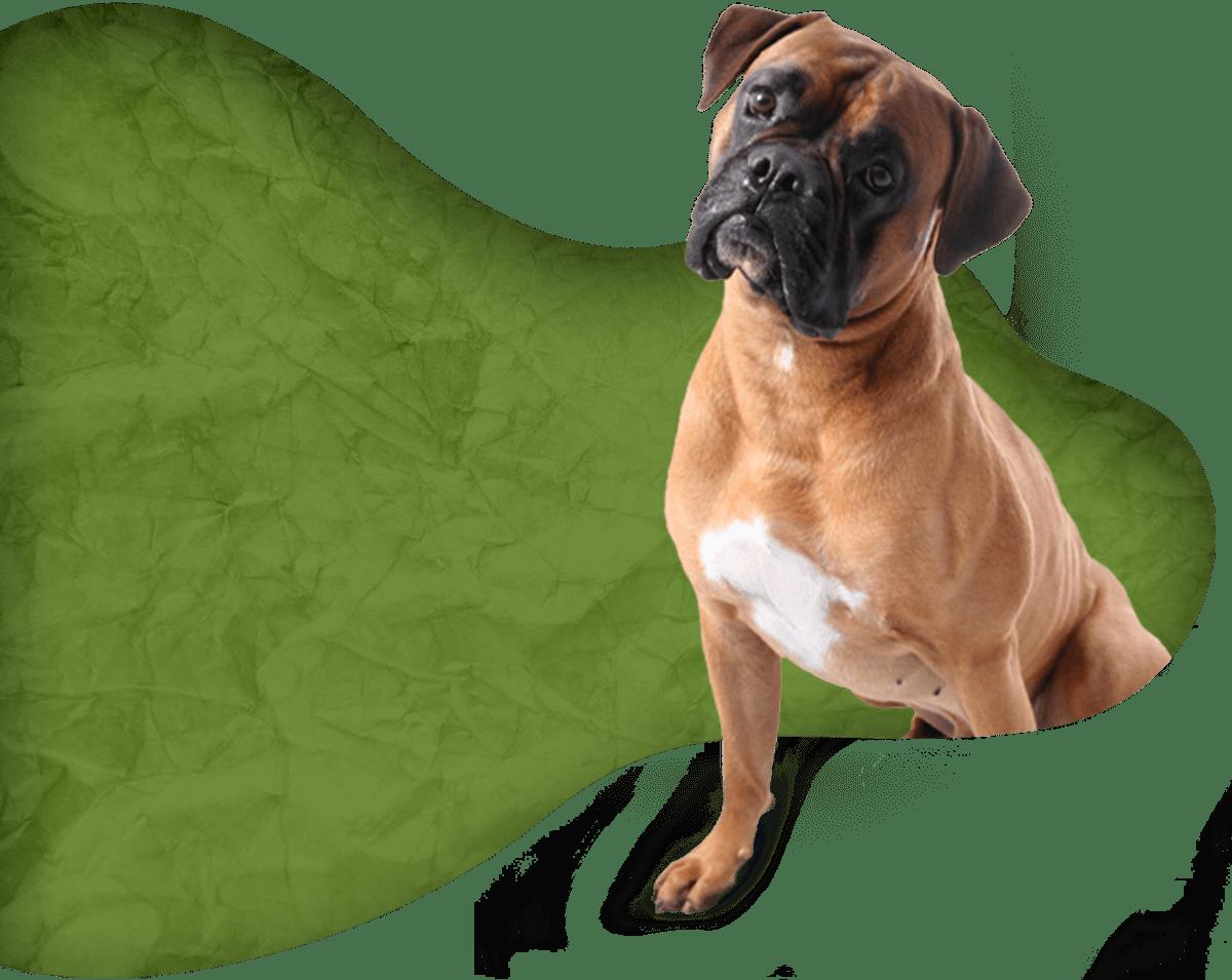 Comportementaliste canin à Borgo
